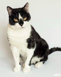Milan is our Pet of the Week! This one year-old cat came to us after falling out of a window, but has made an amazing recovery. Now he loves to play and get back scratches! Take Milan home today: http://www.aspca.org/blog/aspca-pet-week-milan
