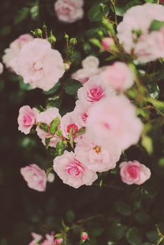 Pink Blossoms #floral #fashion #taskpr #inspiration