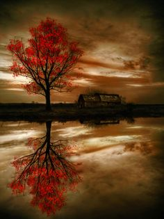 red tree of autumn...