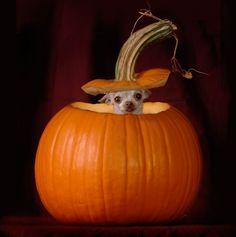 Pop goes the pumpkin!