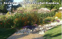 Garden  secrets of a successful garden