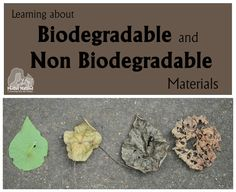 Learning about Biodegradable and Non Biodegradable Materials   Mother Natured