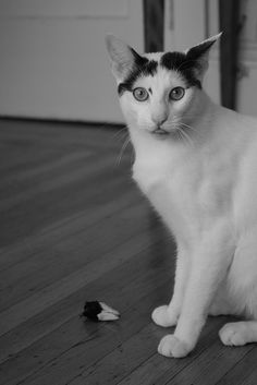 Silly Max by Deadweight Photography, via Flickr
