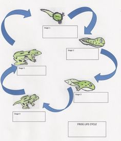 Life Cycle of a Frog: Lesson Plan for Elementary Students