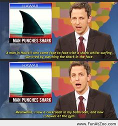 Man punches shark - Funny Picture