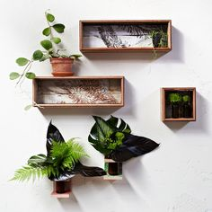 Wall vases and shadow boxes made with reclaimed wood and screen printed in Melbourne