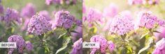 lightroom preset, photo tut, favorit photographi, photographi trick, photographi secret
