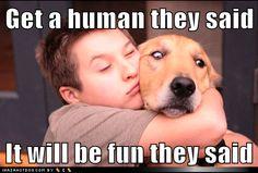 funni stuff, anim, laugh, dogs, pet, funni dog, humor, puppi, human