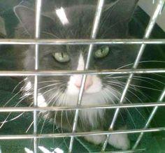 Meet Geoffrey, official National Cat Day 2013 'MasCAT'