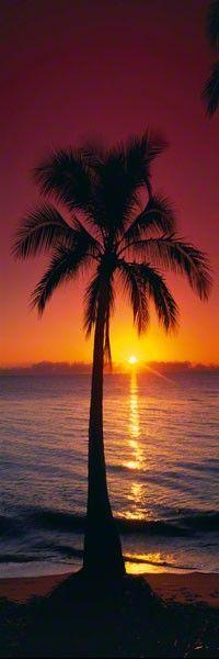 beaches, silhouett, ocean beach, palm trees beach, tropic sunris, sunsets hawaii, australia, fine art photography, palm tree with a sunset