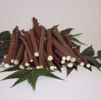 Neem Chew Sticks... Chew the end of the stick to form bristles and then carefully rub the bristles along your gum line as you would a toothbrush. Cut off the end each time you use it to ensure freshness.