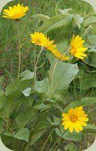 Wild plants for medicine & Food