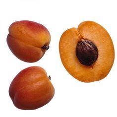 Agave Peach