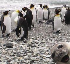 Hilarious Animal Photobombs