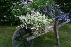 Old Cart Full Of Flowers