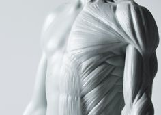 3DTotal's Anatomical Collection: Male figure by 3DTotal Games — Kickstarter