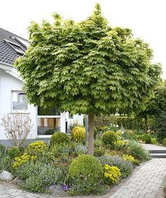 garden on pinterest 22 pins. Black Bedroom Furniture Sets. Home Design Ideas