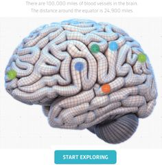 How Can You Use This Interactive Brain Map To Explore Strategies For Accelerated Learning? #interactive #infographic