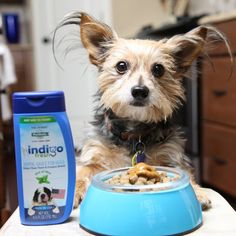 indigo™ Fresh Dental Sauce: Add to your dog's meal for fresher breath and #clean teeth!