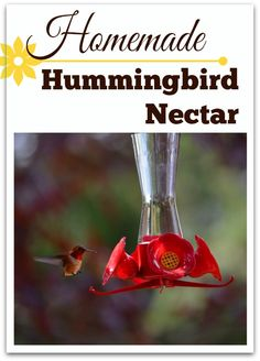 Make your own Hummingbird nectar: http://queenbeecoupons.com/