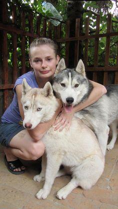 Siberian husky, husky, husky puppy