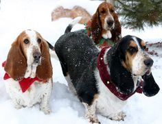 Nocturne, Bueller and Newt in their Christmas attire