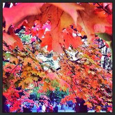 By @Kurumi Mori. #fallfoliage #centralpark fallfoliag centralpark