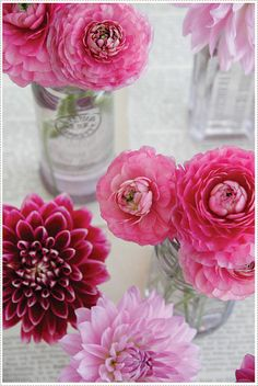 more dahlias + ranunculus