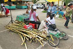 Google Image Result for http://holeinthedonut.com/wp-content/uploads/2012/04/Best-of-Ecuador-Banos-Sugar-Cane.jpg
