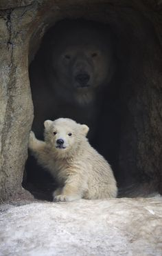 mama bear's always watching | nature and beauty :)