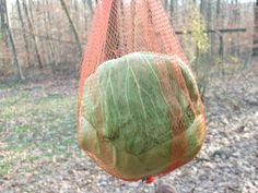 Hang a cabbage inside an old onion bag about head-heighth of the chickens. They'll get hours of enjoyment picking at the cabbage. onion bag, winter, earth, birds, coats, bags, friend, keeping chickens, cabbag insid
