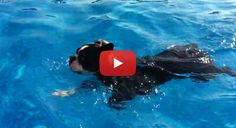 This Boston Terrier Loves Swimming More Than Anything! :) Watch! ► http://www.bterrier.com/?p=19348 - https://www.facebook.com/bterrierdogs