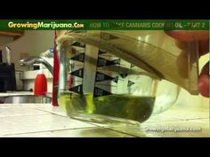 Cooking With Weed - How To Make Cannabis Cooking Oil - Part 2 http://growingmarijuana.com/