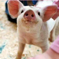 Little sweetheart!! #vegan #inspiration