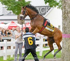 Horse racing: Havre de Grace having some fun in the Saratoga paddock