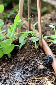 Tips for keeping your strawbale garden watered