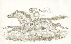 Free Antique Clip Art - Pen Flourishing Horse with Cherub