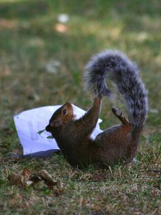 the Crazy Squirrel by Greencolander, via Flickr