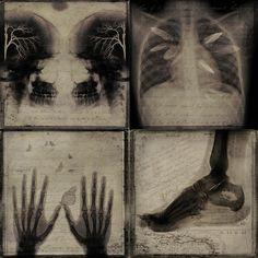 The Human Anatomy; interrelation with nature