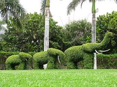 Landscape Topiary