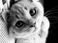 Kitties Photo: Adorable kitties