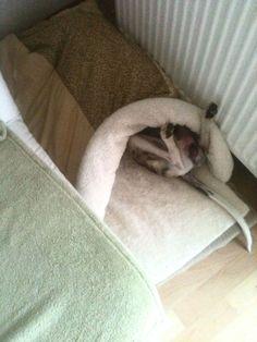 whippet sleeping bag. skinni dog, dog item, dog sleep, whippet dog