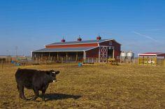 Morton Buildings livestock facility in Illinois.