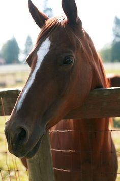Quarter horse!