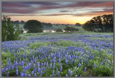 Come see the beautiful Texas Hill Country photography of Rob Greebon!  http://www.robgreebonphotography.com/index.html