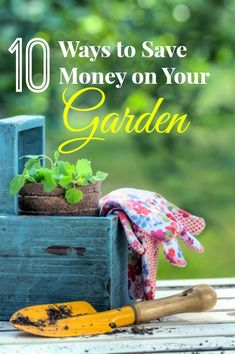 Top 10 Ways to Save Money on Your Garden