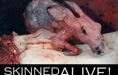 Tell etsy: Ban Grisly Fur Trinkets Please sign this petition. SKINNING animals alive is cruel, no excuses. ANIMALS FEEL PAIN.