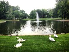 The Four Swans of #L