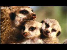 What A Wonderful World With David Attenborough -- BBC One [FULL HD] - YouTube