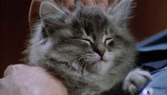 The Tao Of Kitten Head Scratching